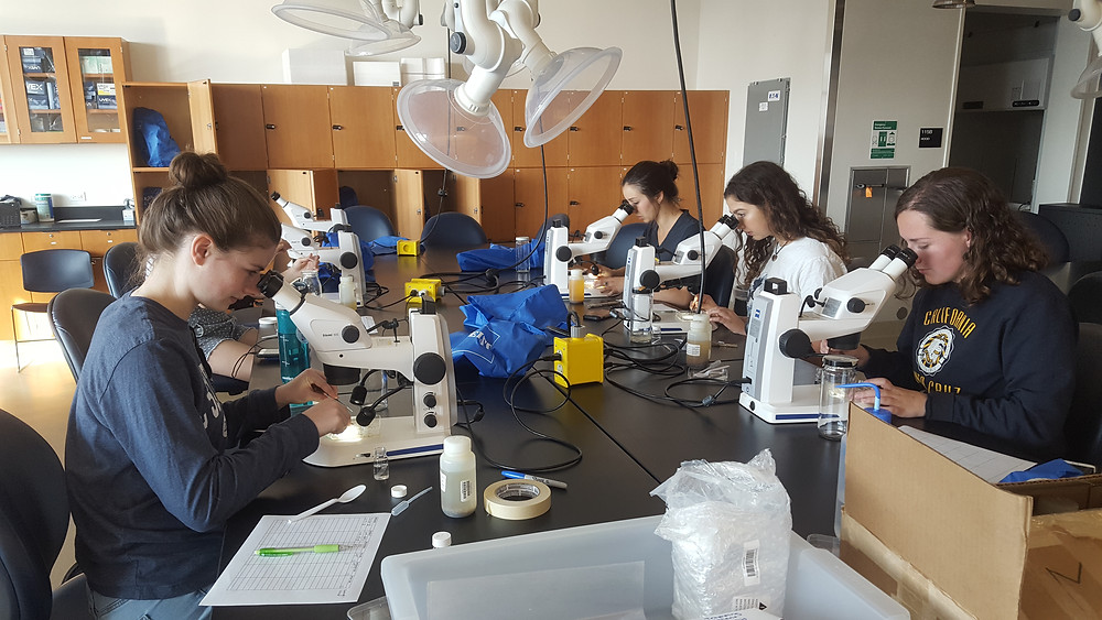 Undergraduate sorting plankton samples