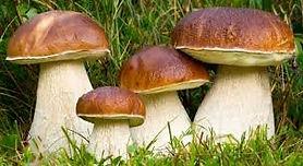 funghi.jpg