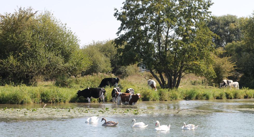 Ile Chouquet, Venon, (Eure).JPG