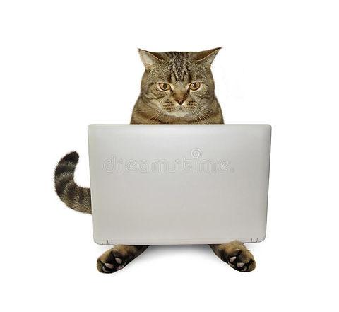 cat on pc.jpg