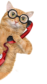 Cat%20on%20phone_edited.png