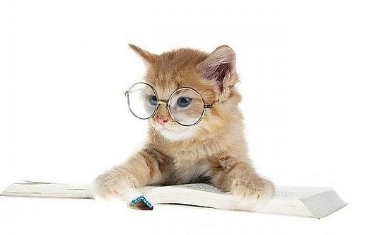 cat t&c.jpg