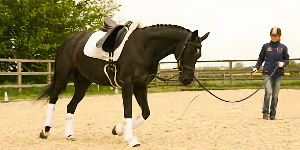 LUNGING FOR RIDERS WITH TAMSIN ADDISON