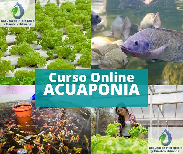 imagen Curso Acuaponia Online.jpg