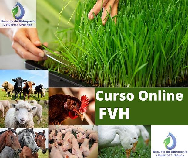 imagen de Curso FVH Online.jpg
