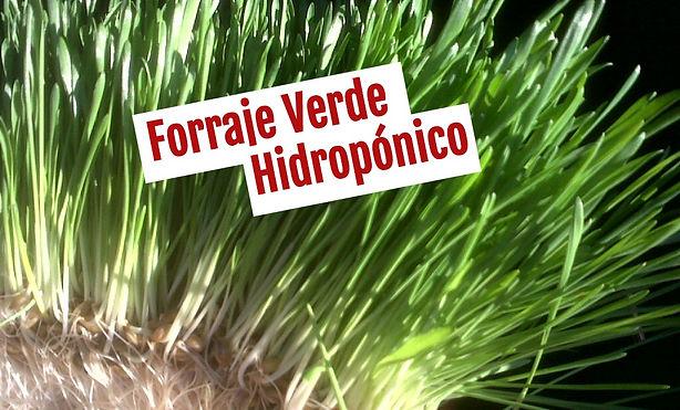 Forraje Verde Hidropónico