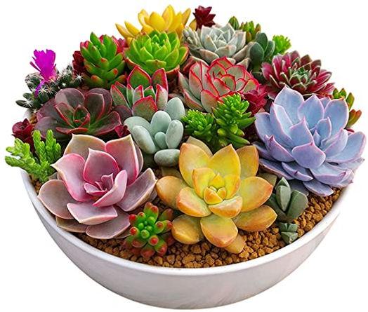 plantas-suculentas.jpg