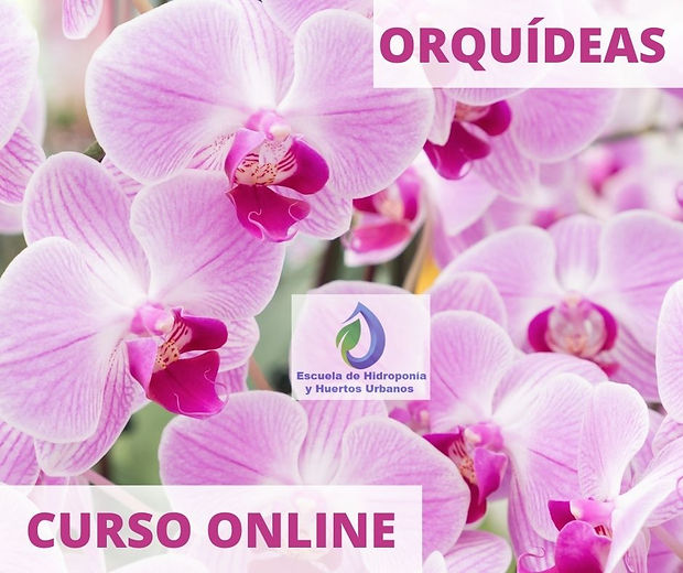 _imagen  Curso Orquideas Online.jpg