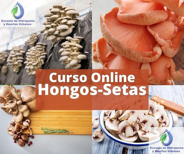 imagen  Curso Hongos Setas Online.jpg
