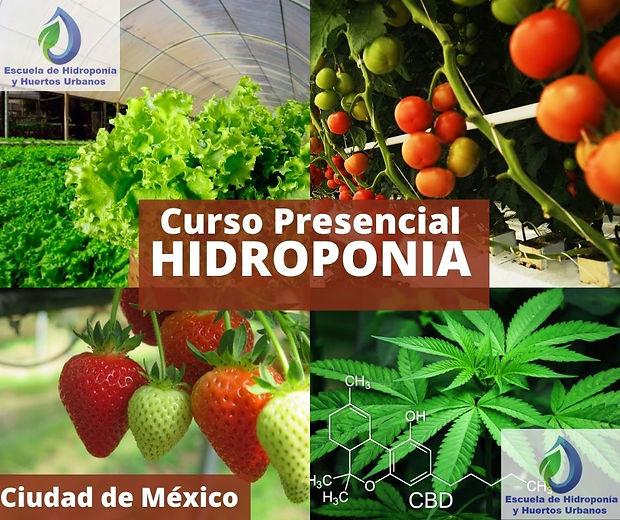 imagen-  Curso Hidroponia Presencial.jpg