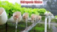 Hidroponia, Curso de Hidroponia, sistema nf, lecuga hidroponica