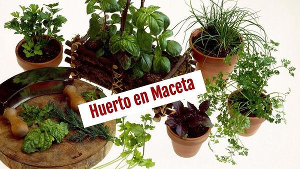 Huerto en Maceta
