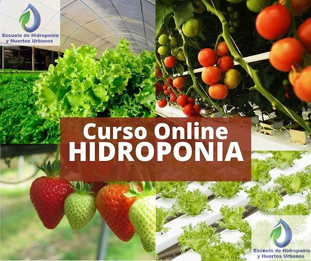 imagen Curso Hidroponia Online.jpg