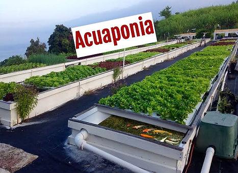 acuaponia_edited.jpg