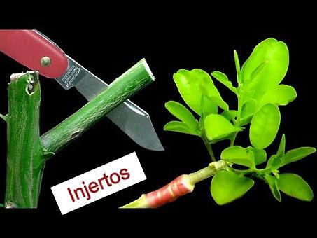injertos_edited.jpg