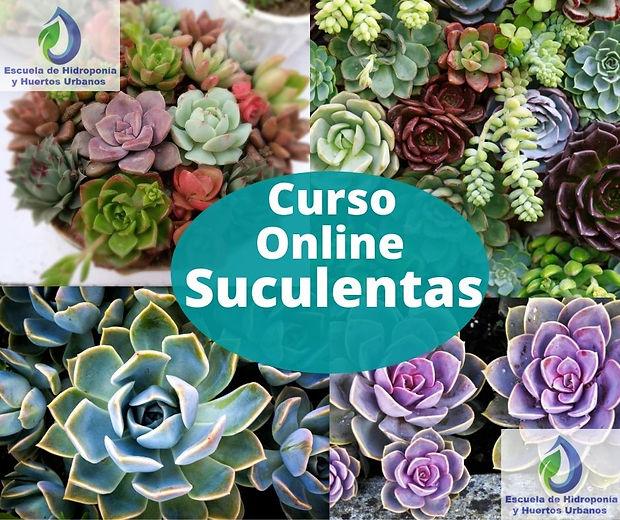 imagen  Suculentas Online.jpg