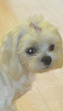 Hundesalon Lilly Köln Hundepflege Köln Krallen schneiden Fellpflege Ungezieferbehandlung Ohrenpflege