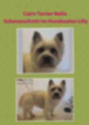 Cairn Terrier Westi Westhighland Terrier Hundesalon Köln Hundesalon Lilly Hundepfriseur Köln