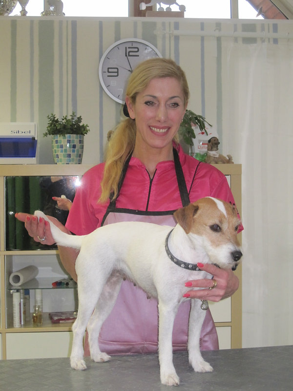 Hundesalon Lilly Köln Hundefriseur Köln Hundepflege Köln fachgerechtes trimmen stripping terrier