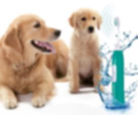 Hundesaln Lilly Köln Zahnreinigung beim Hunde Emmi Pet Hundesalon Lilly