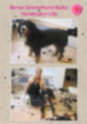 Hundesalon Lilly Köln Hundesalon Köln Hundefriseur Köln Hundepflege Köln Golden Redriever Berner Sennenhund
