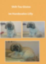 Shih Tzu Hundesalon Köln Hundefriseur Köln Hundesalon Lilly Köln Por