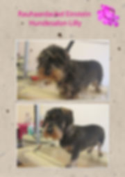 Rauhaardackel Hundesalon Lilly Köln Hundesalon Köln Hundefriseur Köln Hundepflege Köln