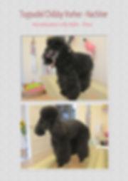 Hundesalon Lilly Köln Hundesalon für Pudel  Köln Hundefriseur für Pudel Köln Hundepflege für Pudel  Köln