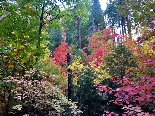 Leaf Peeping: Where to Find the Best Fall Foliage in the Western United States