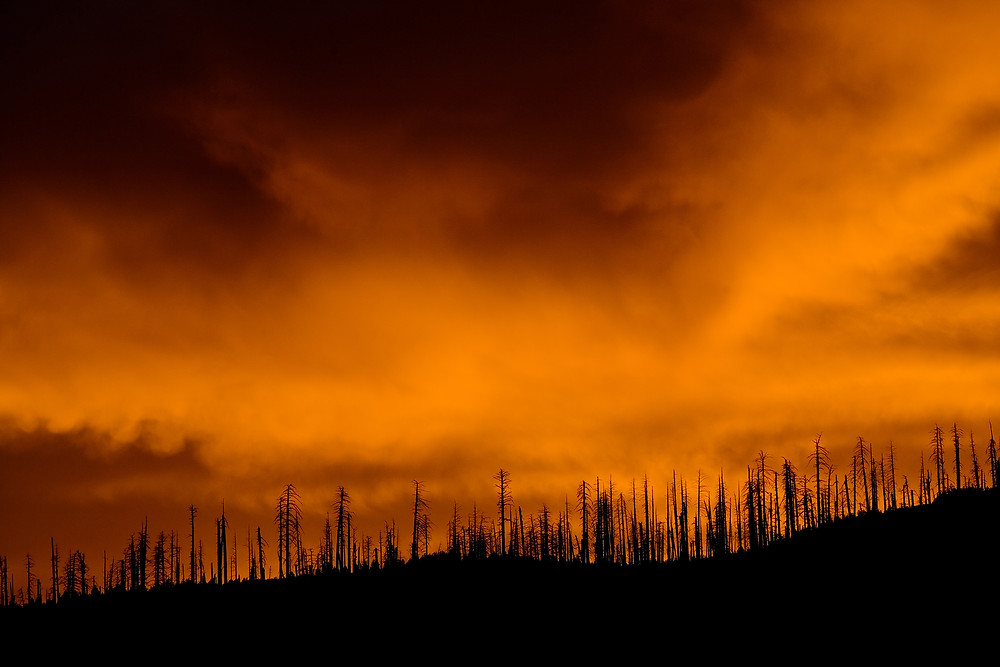 The skites burning orange red and black in the aftermath of a forest fire. Burnt and blackened trees line the mountain ridge at Yosemite National Park