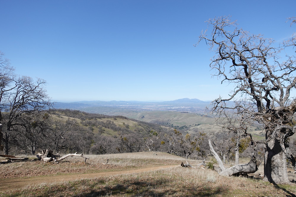 The view stretches for miles of brown hills and grey plantlife in the Ohlone wilderness, torched by the SCU Lightning Complex fire just 6 months earlier
