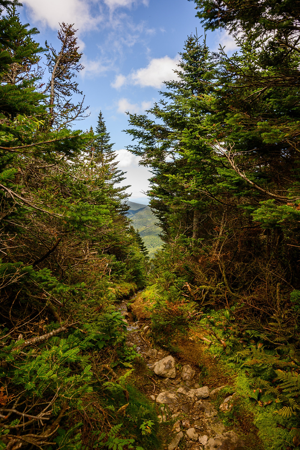 the Long Trail splits the trees and stretches off into the horizon in Green Mountains National Forest in Vermont, home of the greenest greens that ever did green