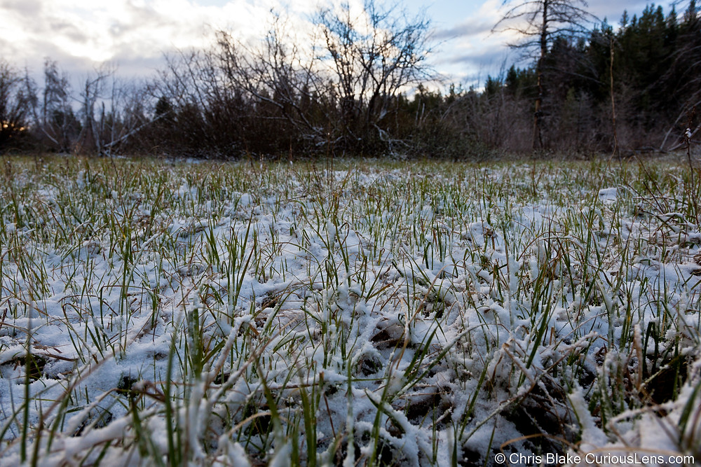 Close up of grass crunchy with snow at Grand Teton National Park in Wyoming