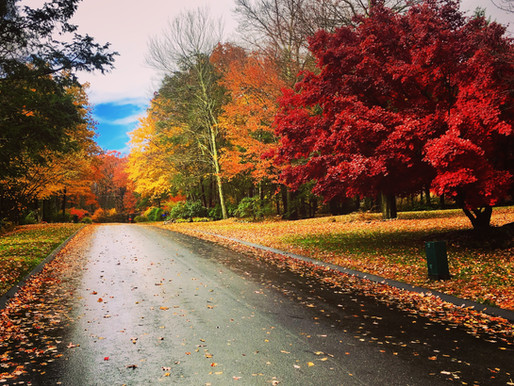 Leaf Peeping: Where to Find the Best Fall Foliage in the Eastern United States