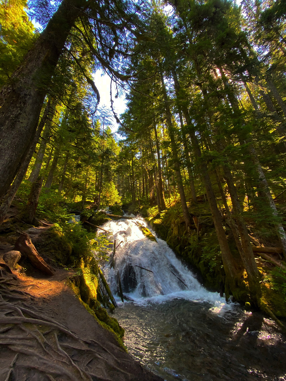 Little Zigzag Falls zigzags little-ly down the side of Mount Hood in Oregon