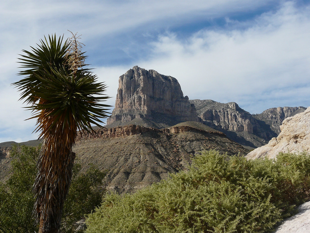 Guadalupe Mountains National Park in Texas - Joshua tree in the forefront, mountain in the back