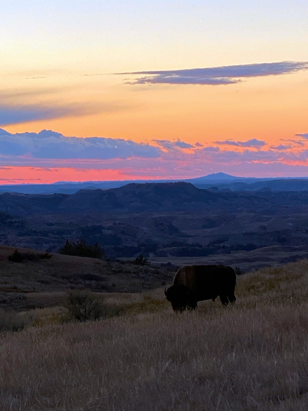 a watercolor sunset over a Bison in Theodore Roosevelt National Park features vivid pinks, purples, and oranges over the plains