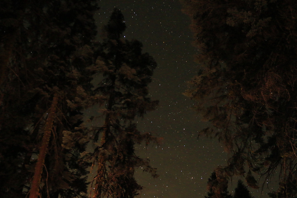 Stars twinkle in the dark sky over giant Sequoias in Sequoia National Forest, California