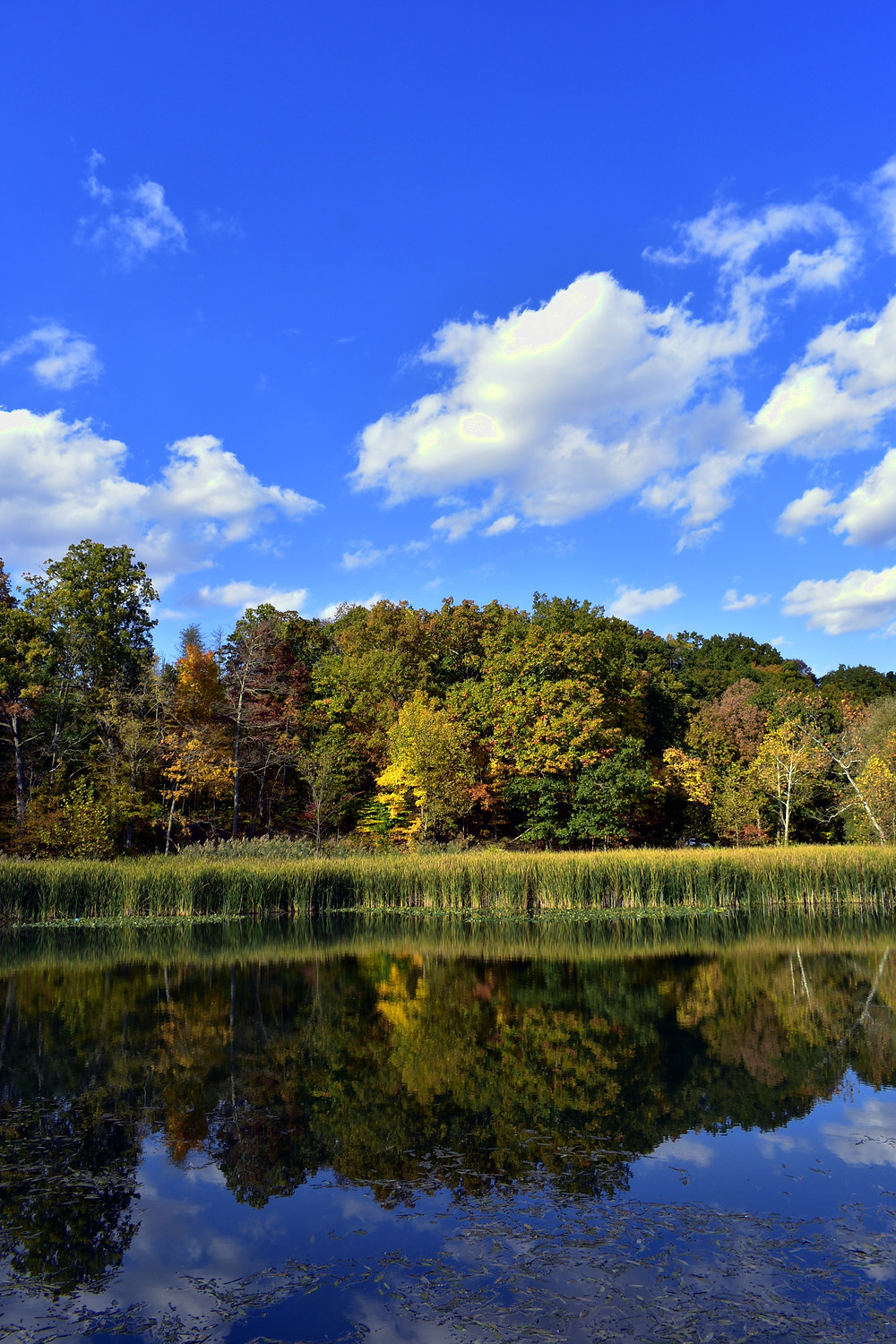 Blue skies overhead are reflected in the crystal blue waters of the many lakes in Cuyahoga National Park in Ohio