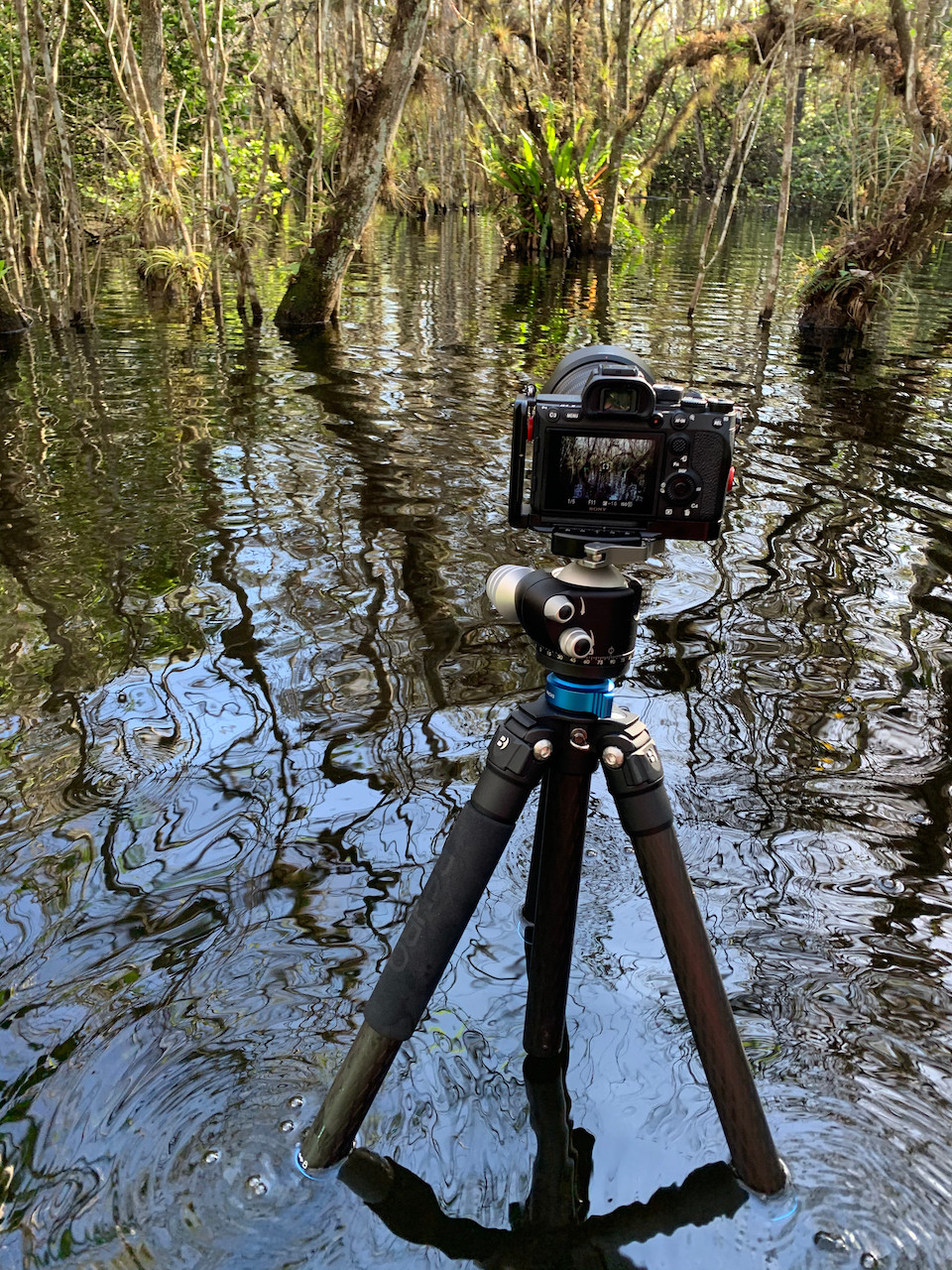 A camera is mounted on a tripod, half submerged in a swamp to capture the natural beauty of such a diverse biome