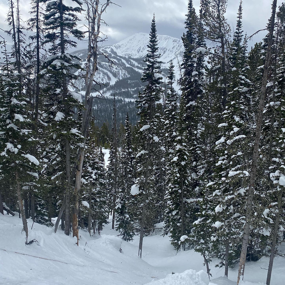 Snowy pine trees in the foreground, an enormous snow-covered mountain looming in the background in Big Sky, Montana