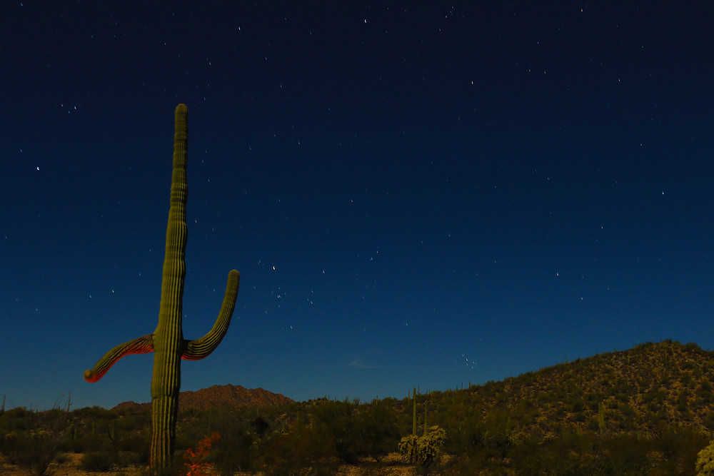 Stars light up the blue black night sky over Organ Pipe National Monument in Arizona. In the foreground, a Saguaro cactus dances gleefully
