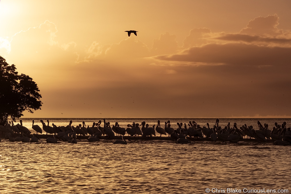 Pelicans gather on a small sand bar with one flying overhead, as the sunset bleeds orange across the sky over Everglades National Park in Florida