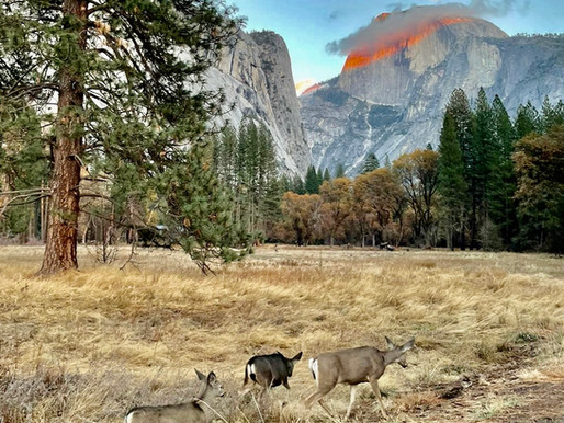Hiking Yosemite's Half Dome: My Journey to Loving the Outdoors