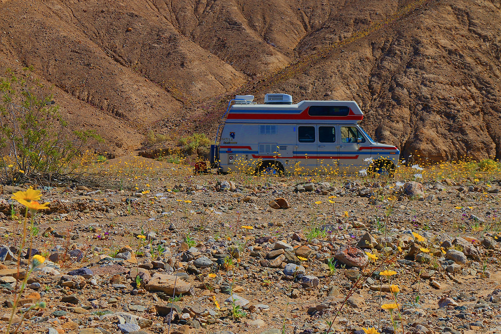 Spirit of the west camper van parked in Death Valley National Park amidst a Super Bloom of flowers on the desert grounds