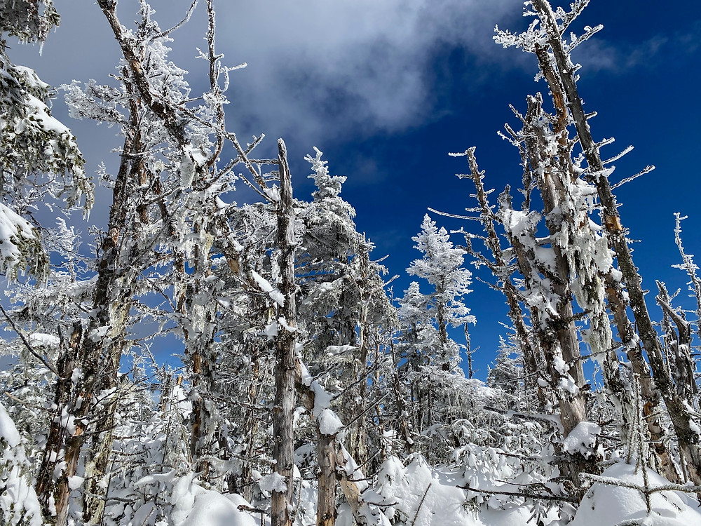 snow and ice covered trees under a shockingly blue sky in White Mountains National Forest, New Hampshire