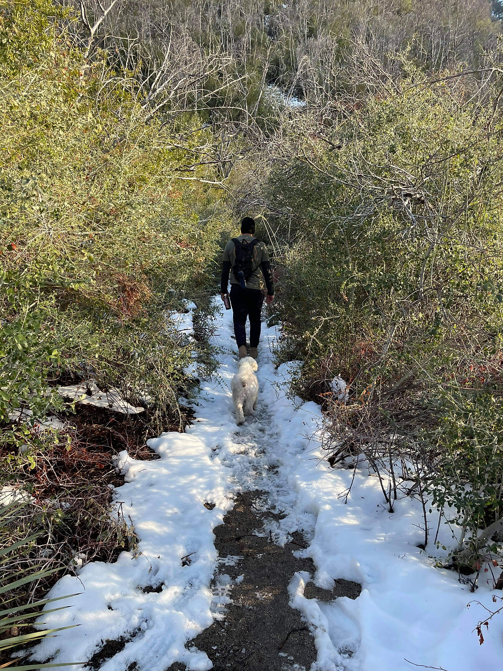 A fluffy white dog named Yogi follows his best friend down a shallow creek that serves as a hiking trail through Angeles National Forest, just outside Los Angeles, California