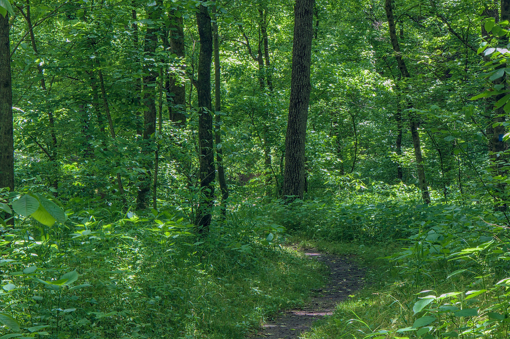 An onslaught of lush greenery in the Grafton Notch State Park in western Maine