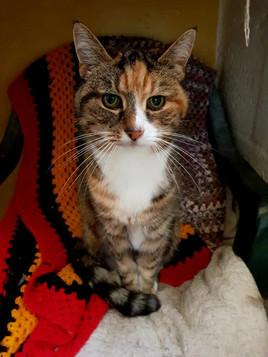 Mayfield Pet Hotel Cattery 7.jpg
