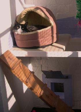 Mayfield Pet Hotel Cattery 1.jpg